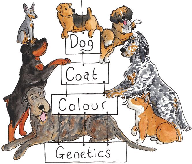 Color Coat Genetics 101