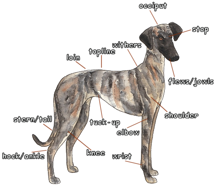 Dog Body Parts Inside Body Parts in Dogs
