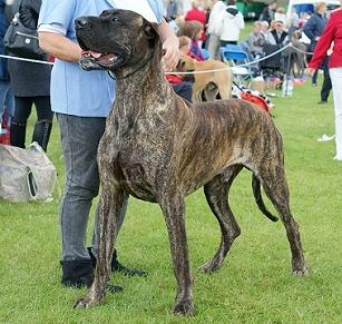 Dog Coat Colour Genetics