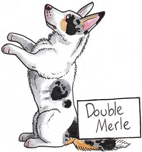 Белые проблемы - Страница 9 Doublemerlebanner