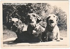 """Birke, Vicki and Frutzi, 1949"", Germany (snapshot)"