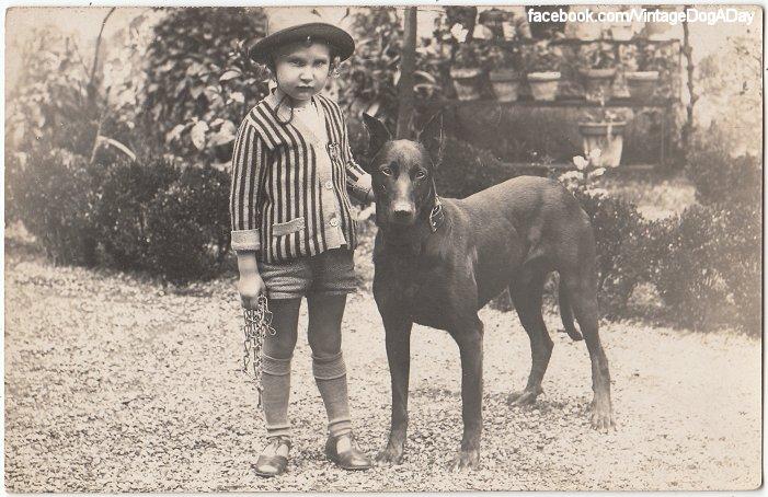 Dog Coat Colour Genetics - Vintage Photos